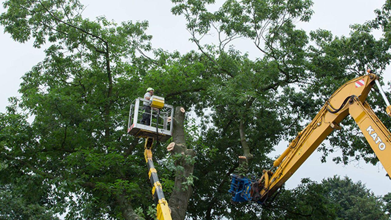 Boomonderhoud voor veiligheid in Bilthoven Noord